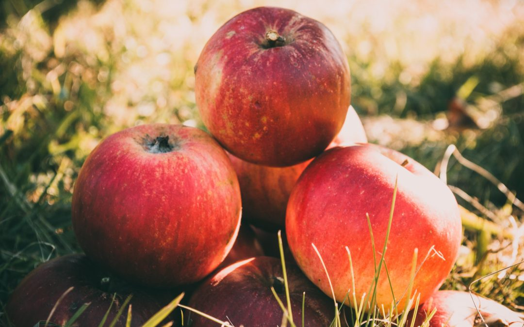 The 7 Best Orchards To Go Apple Picking Near NYC